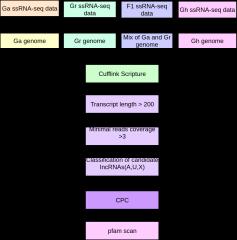 lncRNA鉴定